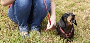 nuisance-barking