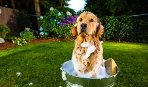 Soapy dog in bucket outside
