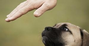 Dog looking at hand