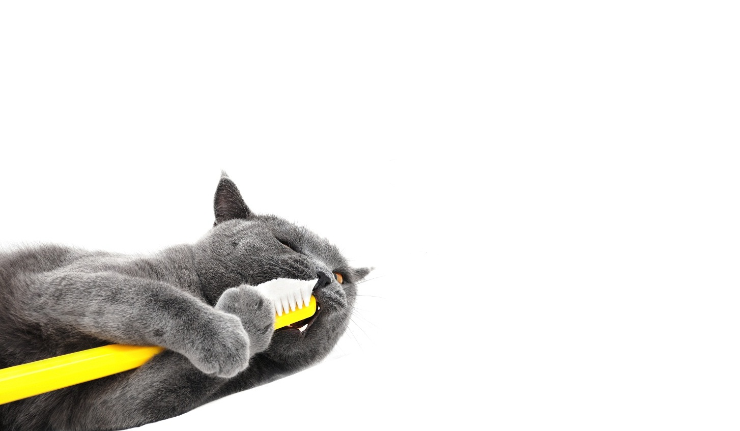 cat products and articles pet valu pet store pet food
