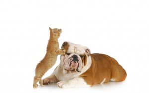 Cat climbing on dog