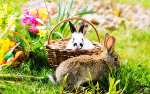 rabbits in garden with basket
