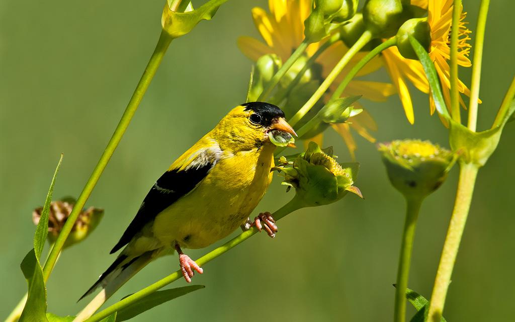 Summer Bird Watching: Who's That Tweeting in My Window?
