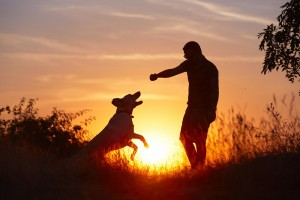 Silhouette of dog and owner playing outside at sunset