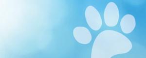 Blue paw illustration