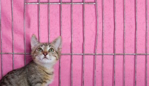 Blog Header Banner Cat #433
