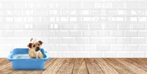 Pet valu puppy classes