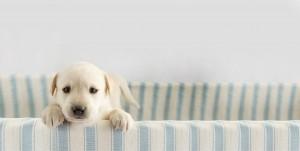 Puppy peeking over wall