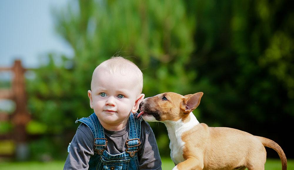 Dog-Friendly Lawn & Garden Tips