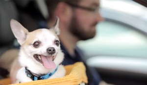 Pet Expert Tips: How to Travel Safely with your Dog