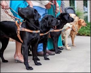 2015-vet-dogs-2