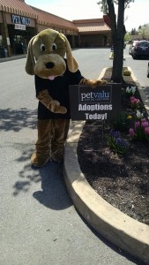 Dog-w-Adoptions-Sign