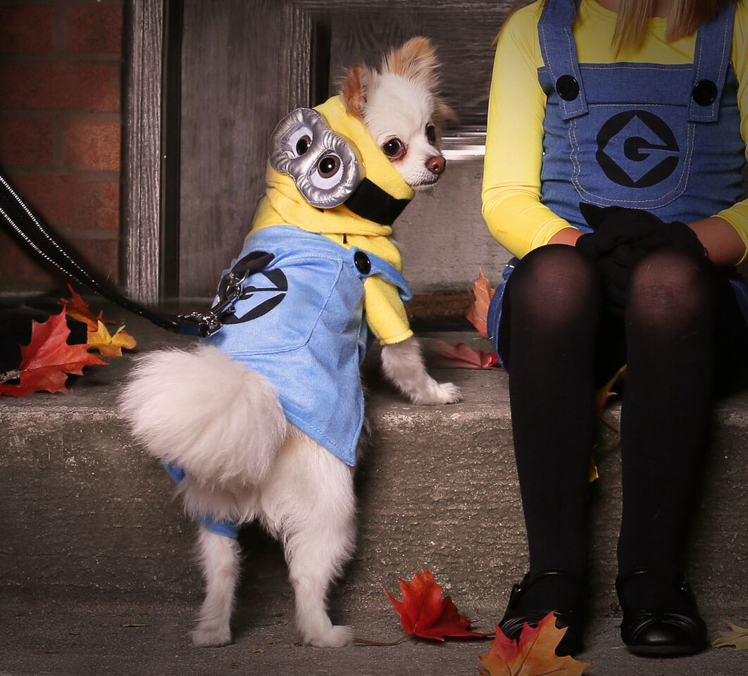 the minion is pet valu's halloween pick of the year | pet articles