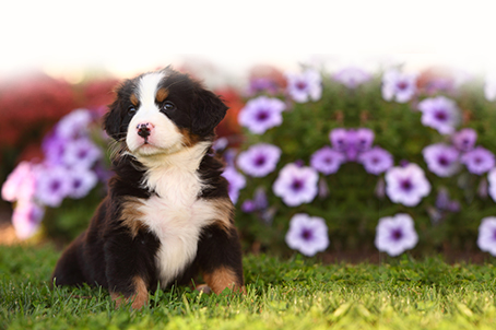 Give your Large Breed Puppy