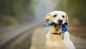 Dog at roadside holding leash in mouth