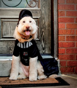 specialty pet chain u2014 is predicting star wars inspired styles will be its most popular pet halloween costumes of
