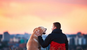 Dog and owner looking over city skyline