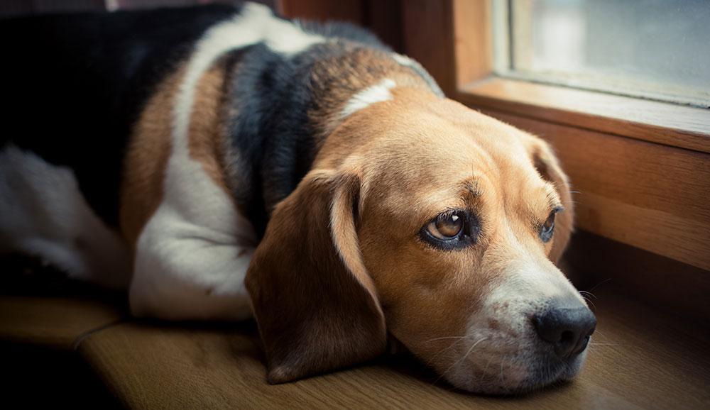 Understanding Your Pet's Body