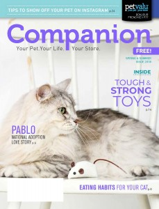 Companion issue 26 2018