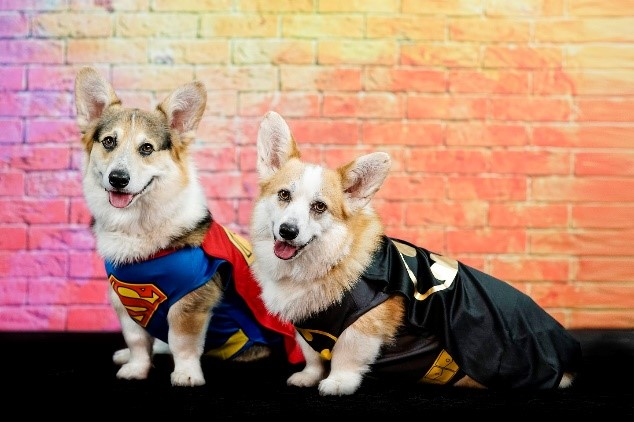 Wonder Woman, Batman, and Superman dog costume