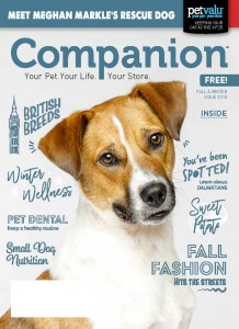 18-3994 Companion_Fall Winter Issue_PVCI LR_Page_01