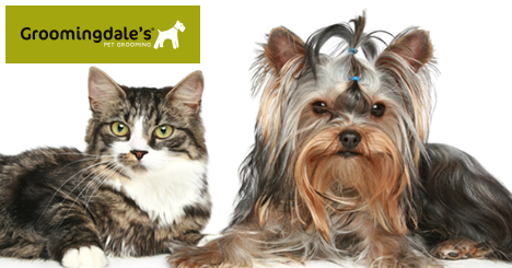 Groomingdale's full-service salons provide a personalized experience right in your local store, where your pet is top priority.