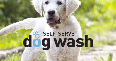 Our self-serve dog washes are unique stations where you'll find everything you need to get your pet clean and smelling great for only $10!