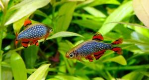 18-4102 Friendly Fish 2560x1370