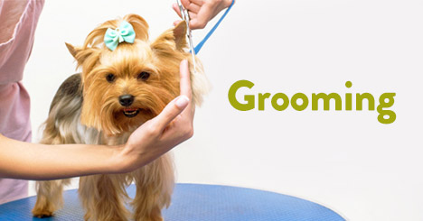 GroomingTail's full-service salons provide a personalized experience right in your local store, where your pet is top priority.