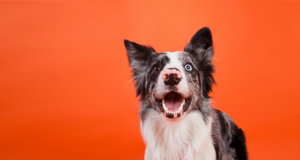 Your Pet's Dental Health Routine
